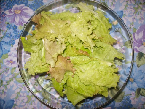 Lettuce from my garden