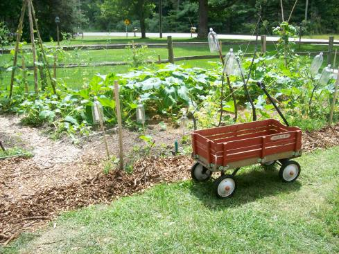 This little red wagon transported twelve loads of wood chips from across the street to secure the bottom edge of my fence.